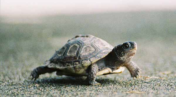 turtle-slow-seo